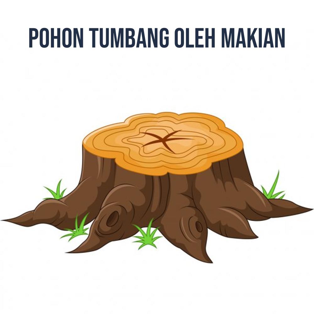 Pohon Tumbang Oleh Makian